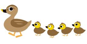 ガン科やカモ科の水鳥は、基本的に渡り鳥ですから、遥かかなたの越冬地に向かって、気温マイナス40℃とも言われる極寒の上空を飛んでいきます。その飛行時の寒さから身を守るために、ダウンが必要になった