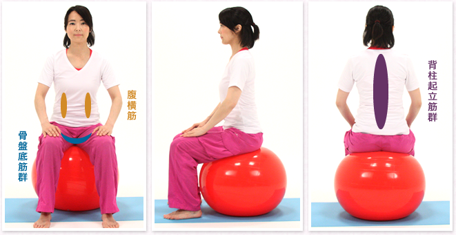 脊柱起立筋群、腹横筋、骨盤底筋群などの体幹が鍛えられ姿勢も整う
