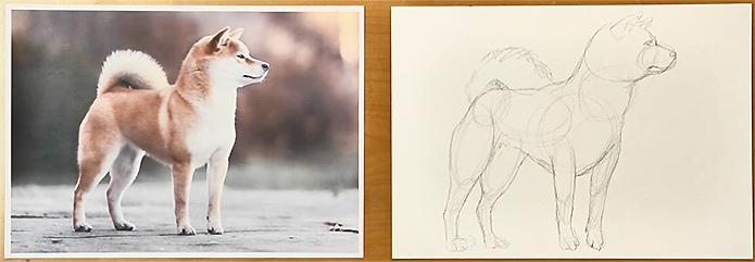 ③捉えた骨格を元に自然な形に描き直していきます。