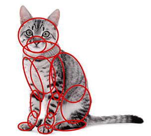 猫の描き方
