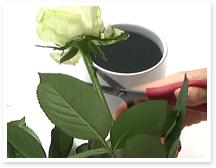 メイン花材のバラを挿していきます。まずは、バラの小さなトゲをハサミで取ります。ハサミの刃でやさしくこすり落とします。