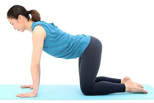 肩の真下に手首、股関節の真下にひざを置きます。